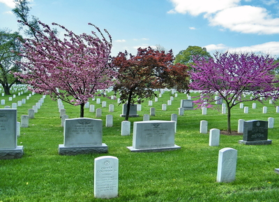 Arlington National Cemetery Spring 2010