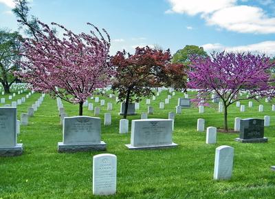 Arlington National Cemetery Spring 2010
